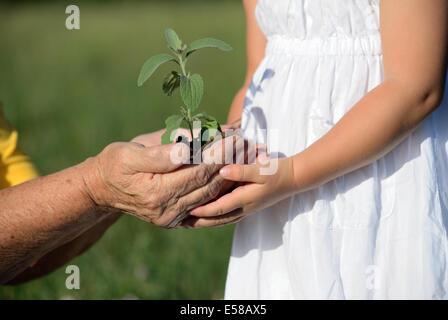 Großmutter und Enkelin eine Pflanze zusammenhalten - Stockfoto