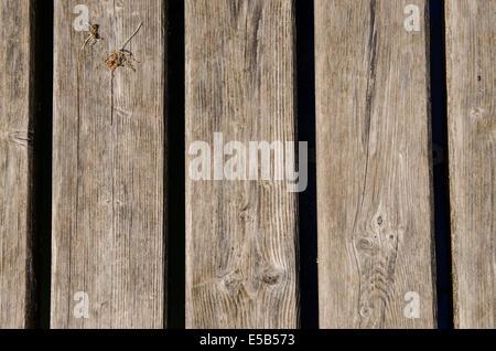 Getrocknete alte verwitterte Holzbretter als Hintergrund - Stockfoto