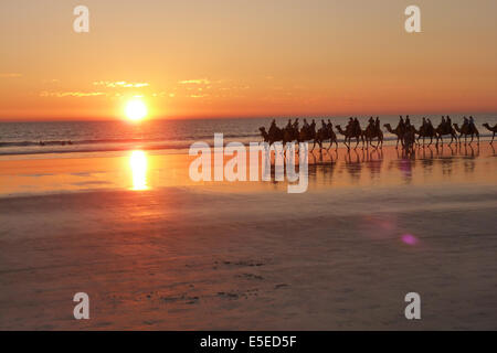 Kamele am Cable Beach in Broome, Australien - Stockfoto