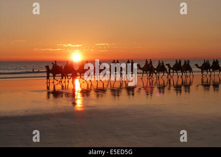 Cable Beach Kamele - Stockfoto
