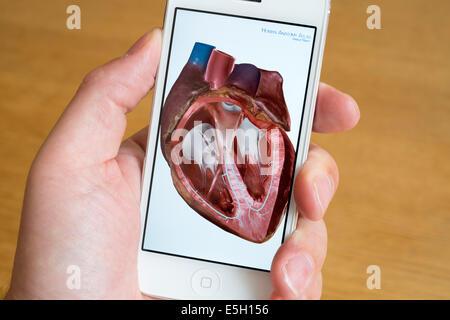 Verwendung von Gesundheits-app, menschliche Anatomie auf ein iPhone ...