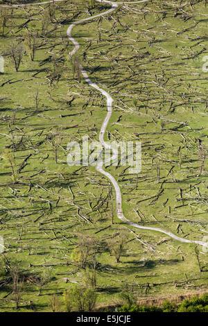 Niederlande, Lelystad. Nationalpark namens Oostvaardersplassen. Luft. Feld der Toten Bäume. Feuchtgebiete - Stockfoto