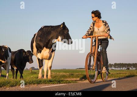 Niederlande, Stavoren, Kuh Frau Ast Fahrrad zu betrachten. Das Dutch Design aus Holz-Bike ist eine Schöpfung von - Stockfoto
