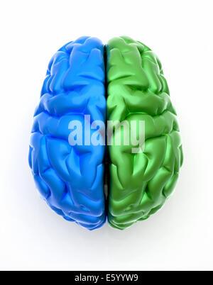 Konzeptbild eines Gehirns blauen Ende Grün über weiß - dies ist ein 3d render Abbildung - Stockfoto