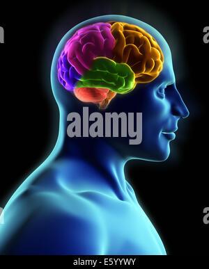 Menschlichen Körper und Gehirn, Röntgen-Blick - 3d render - Stockfoto