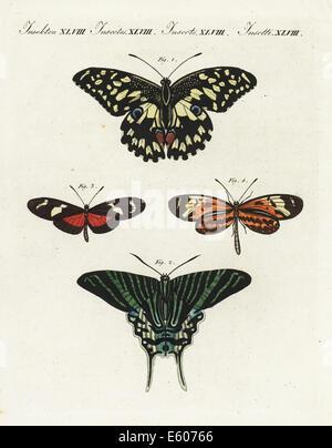 Gemeinsamen Lime Butterfly, Tag fliegenden Schwalbenschwanz Nachtfalter und Ricini Longwing. - Stockfoto