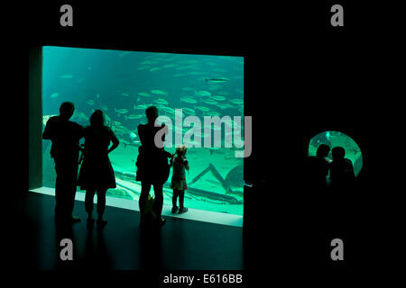 Besucher vor einem Aquarium Nordsøen Oceanarium Hirtshals, Nord-Jütland, Dänemark - Stockfoto