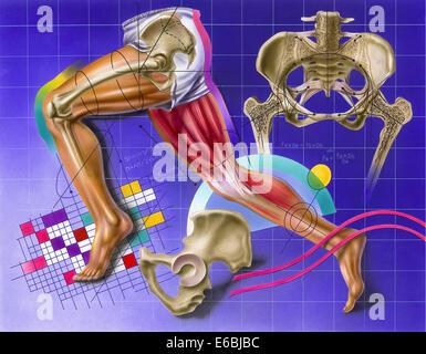 Schaltplan, Hüfte und Bein Bewegung zeigen. - Stockfoto