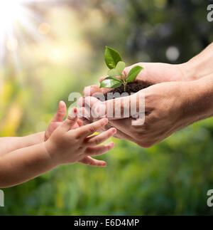 Hände eines Kindes, wobei eine Pflanze aus den Händen eines Mannes - Garten - Stockfoto