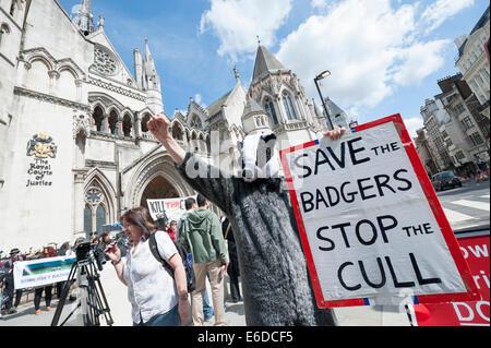 Royal Courts of Justice, London, UK. 21. August 2014. Eine große Schar von anti-Dachs Keulung Demonstranten versammelten - Stockfoto