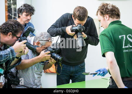London, UK. 21. August 2014. Jährliche Tiere wiegen bei der ZSL London Zoo Credit: Guy Corbishley/Alamy Live-Nachrichten - Stockfoto