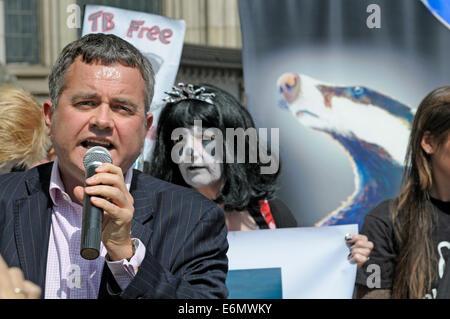 Dienstag, 19. August 2014. Dominic Dyer spricht Demonstranten vor dem High Court in London, wie der Dachs Trust - Stockfoto