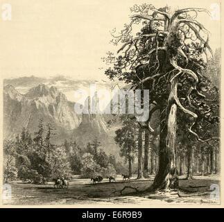 """Ca. 1870 antiken Gravur, 'Tal Stock mit Blick auf Dom-Türme """"in Yosemite National Park. - Stockfoto"""