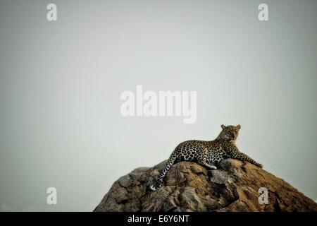 Leopard, liegend auf einem Felsen, Sabi Sands Game Reserve, Südafrika, Afrika - Stockfoto