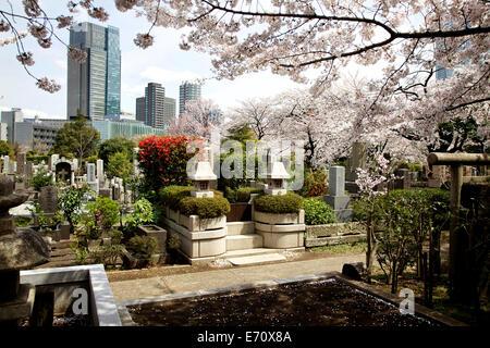 Aoyama Friedhof während der Kirschblüte, Tokio, Japan, Asien. Friedhof, Gräber, Gebäude, Wolkenkratzer - Stockfoto