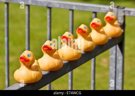 Erhalten Sie Ihre Enten in einer Reihe - Stockfoto