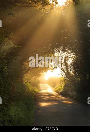 Spätsommer nebligen Sonnenstrahlen durch Bäume entlang einer schmalen Feldweg in den frühen Morgenstunden - Stockfoto