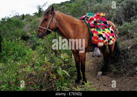 Pferd mieten für Touristen, KUELAP - archäologische Stätte in CHACHAPOYAS. Abteilung von Amazonas. Peru - Stockfoto