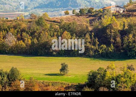 Einsamer Baum im Bereich Landwirtschaft und ländlichen Haus auf dem Hügel im Herbst im Piemont, Norditalien. - Stockfoto