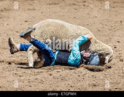 Kleines Kind ein Schaf in der Hammel Zerschlagung Wettbewerb Veranstaltung, Chaffee County Fair & Rodeo Reiten - Stockfoto