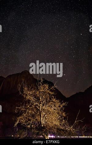 sterne leuchten am nachthimmel ber den baumwipfeln auf einem buchenwald in frankfurt oder. Black Bedroom Furniture Sets. Home Design Ideas