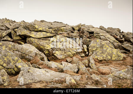 Flechten Sie auf Steinen Platten in Babia Gora Nationalpark - Stockfoto