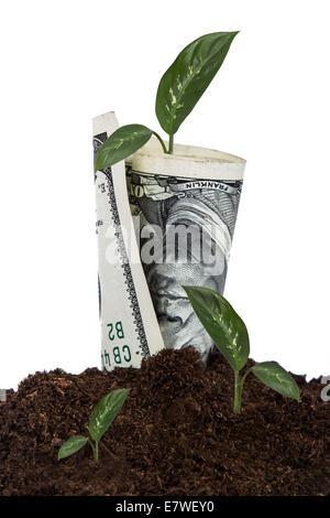 Hundert-Dollar-Schein wachsen im Boden mit Grünpflanzen, isoliert auf weißem Hintergrund. - Stockfoto