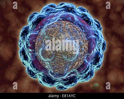 Konzeptbild des Hepatitis-Virus. Viraler Hepatitis ist eine Leberentzündung durch eine virale Infektion. Die häufigsten - Stockfoto