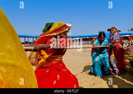 Frauen, die Teilnahme an einem Tauziehen während der berühmten Camel fair in Pushkar, Ajmer, Rajasthan, Indien - Stockfoto