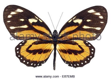 schwarze und wei e motte auf gelbe fl che stockfoto bild 36785952 alamy. Black Bedroom Furniture Sets. Home Design Ideas