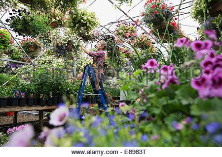 Arbeiter überprüfen Blumenampel Pflanzen Gärtnerei Gewächshaus - Stockfoto