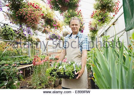 Arbeiter mit Blumen Pflanzen Gärtnerei Gewächshaus - Stockfoto