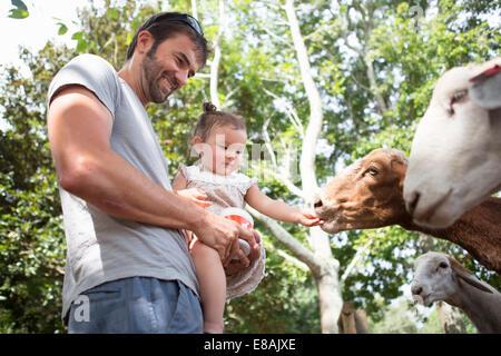 Tochter Vater und Baby füttern Ziegen im zoo - Stockfoto