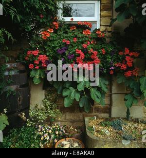 nahaufnahme von roten geranien und sommerpflanzen in terrakotta t pfe hinter eisen gel nder auf. Black Bedroom Furniture Sets. Home Design Ideas