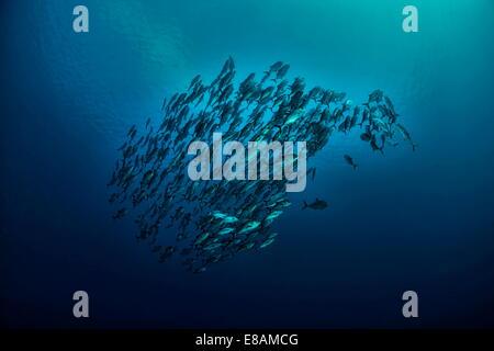Schule der Buben unter Wasser - Stockfoto