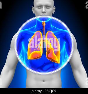 Medizinische Röntgen-Scan - Lunge - Stockfoto