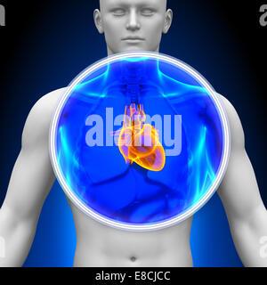 Medizinische Röntgen-Scan - Herz - Stockfoto