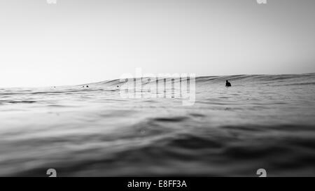 Gruppe von Surfern, die darauf warten, eine Welle zu erwischen - Stockfoto