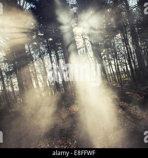 Sonnenlicht durch Bäume - Stockfoto