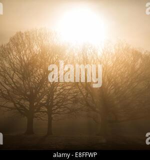 Sonne durch die Bäume im Morgengrauen, Berkshire, England, UK - Stockfoto