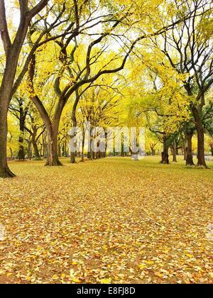 Central Park im Herbst, Manhattan, New York, USA - Stockfoto