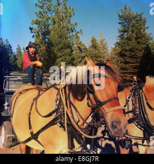 Cowboy auf einer Pferdekutsche, Montana, USA - Stockfoto