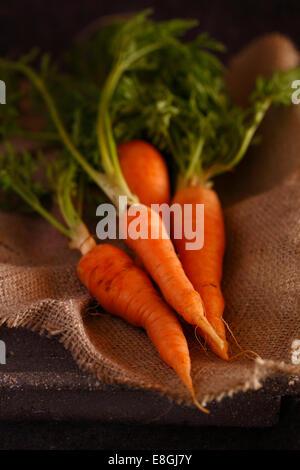 Reihe von Karotten auf Leinen - Stockfoto