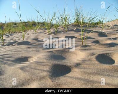 Sleeping Bear Dunes National Lakeshore, Michigan, USA, Amerika, USA - Stockfoto