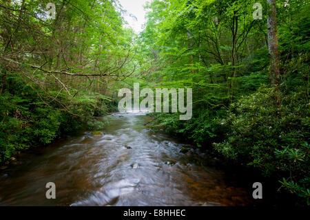 Ein Blick von Laurel Fork von der Brücke, Dennis Bucht Campingplatz entlang der Appalachian Trail im Cherokee National - Stockfoto