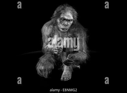 """Spanien, Burgos: Hominid """"Lucy"""" (Australopithecus Afarensis) im Museum der menschlichen Evolution in schwarz / weiß - Stockfoto"""