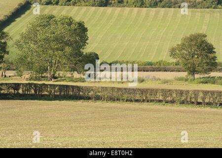 Ackerbau Landwirtschaft am North Downs Hang fruchtbaren kalkhaltigen Böden frisch gesät mit Getreide im Gegensatz - Stockfoto