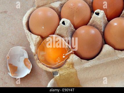 Eiern in box - Stockfoto