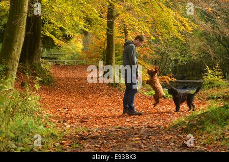 Hamsterley Wald, County Durham, Großbritannien. 18. Oktober 2014. Ein Mann geht seinen Hunden in Hamsterley Forest - Stockfoto