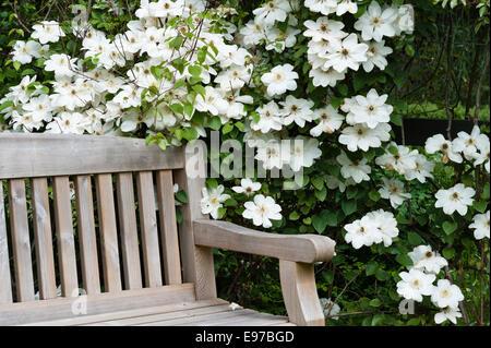 """Marsh Gartenvilla, Par, Cornwall, UK. Clematis """"Guernsey Cream"""" neben einem Garten Holzbank - Stockfoto"""